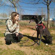 Cursos de adiestrador de perros en Madrid