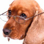cursos educacion canina madrid