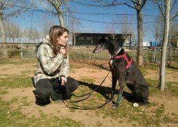 resumes_ano_curso-educacion-canina_20